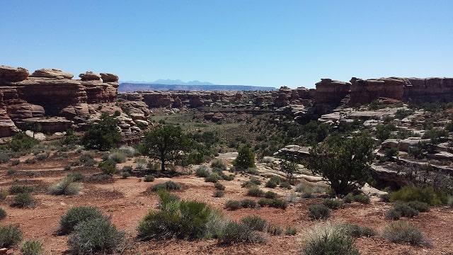 a green valley in redrock desert