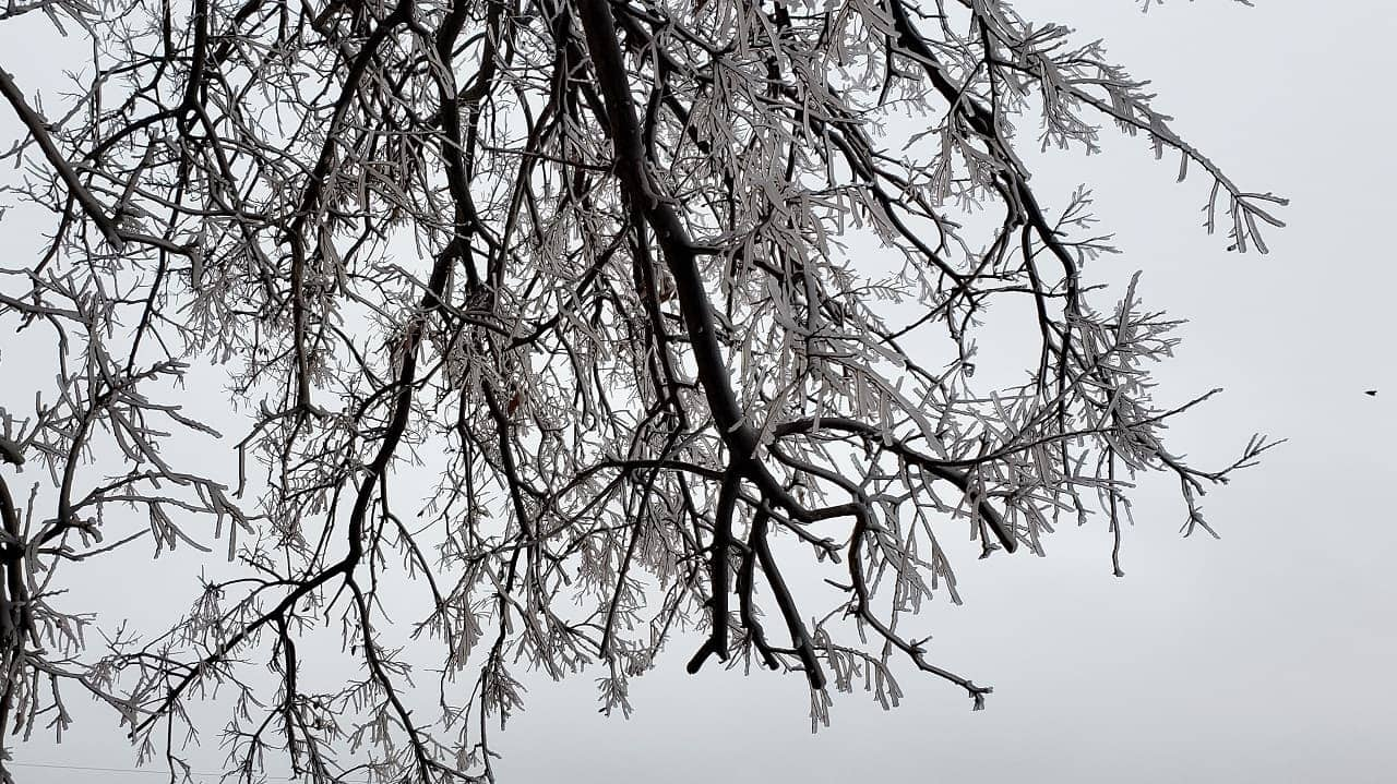 Tree branches coated with ice against a gray sky