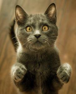 Dazed or crazy cat