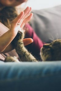 Tabby cat touching a paw to a human palm
