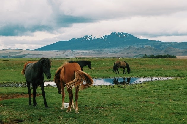 Horses grazing in a meadow with mountains behind