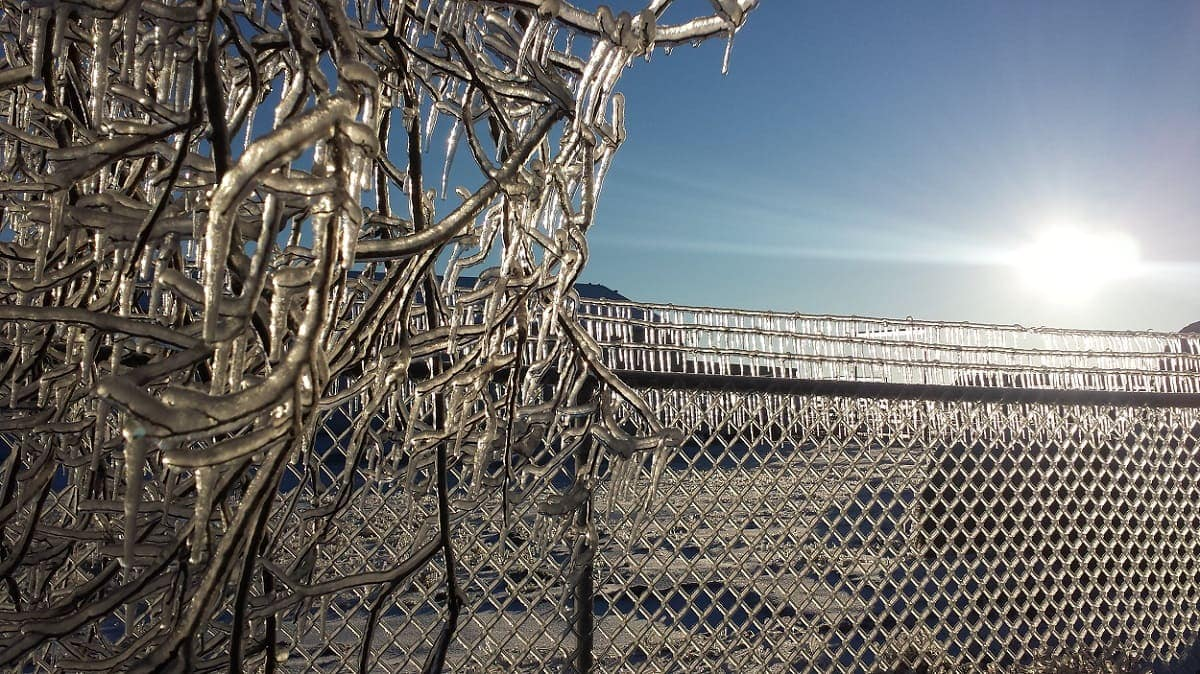 Ice coating a fence and bush at sunrise after the storm