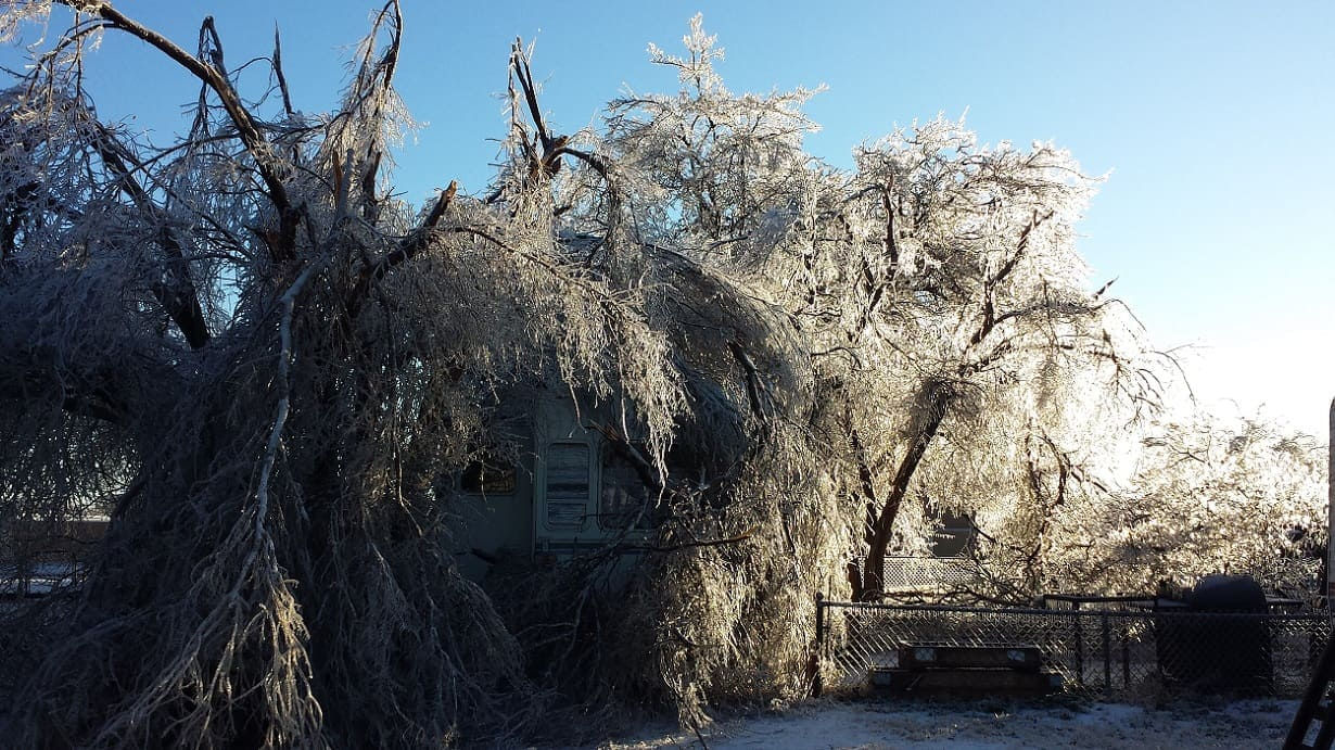 Ice weighted branches covering an RV trailer.