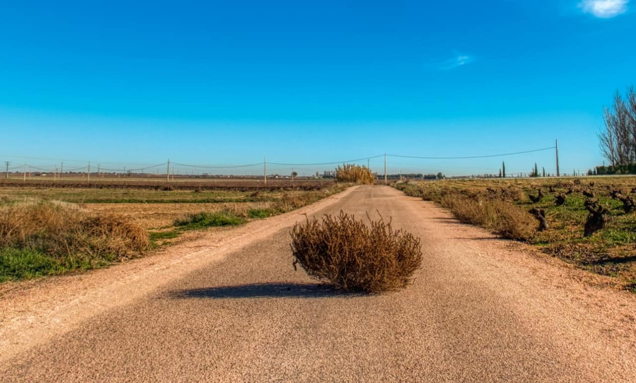 A tumbleweed that has rolled into the middle of a road